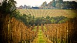 willow-creek-vineyard_mp_credit-adrian-lander_r_1182111_503x283