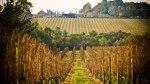 willow-creek-vineyard_mp_credit-adrian-lander_r_1182111_503x283