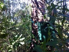 05-Fern Tree