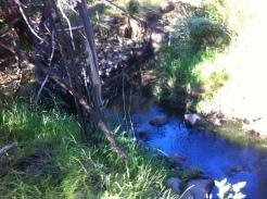 05-Ferny Creek